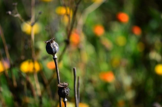 ob_67f573_couleurs-d-automne-l-ete-qui-s-endor