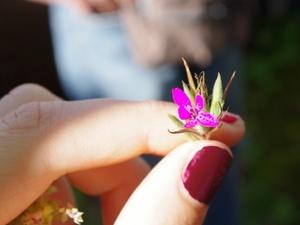 ob_9e92cc_fleur